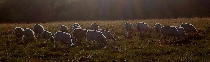 Sheepie Hollow